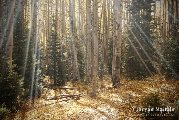 Aspen Rays Colorado