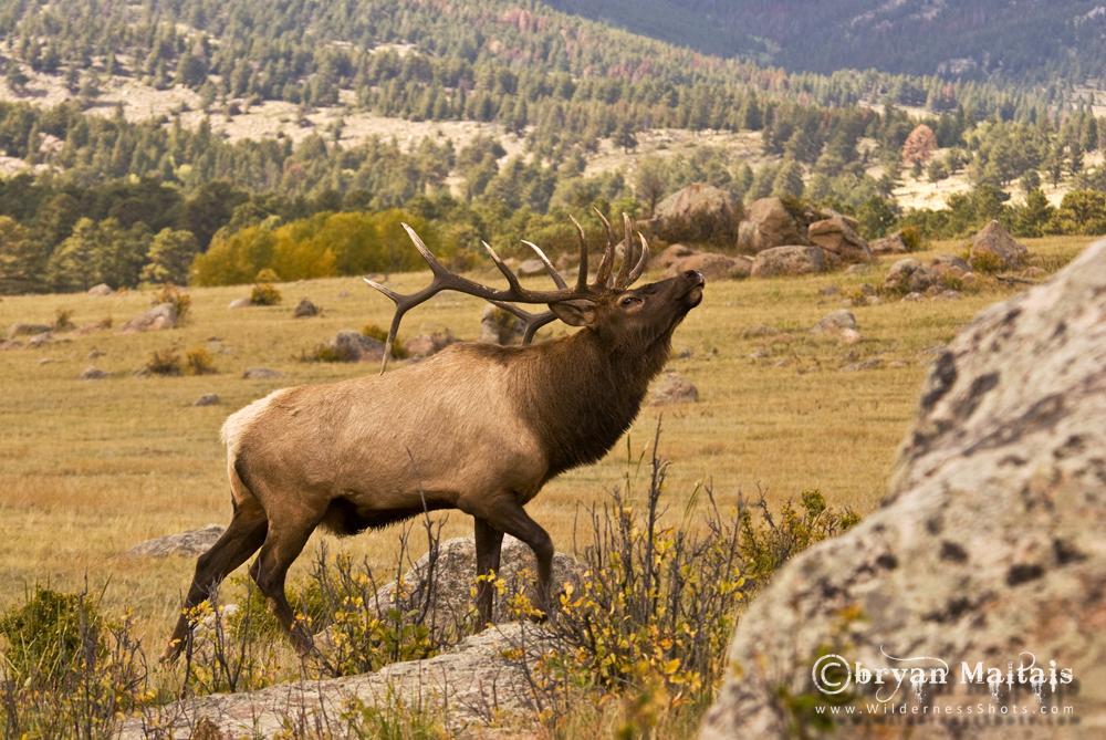 Rocky Mountain Wildlife Photography