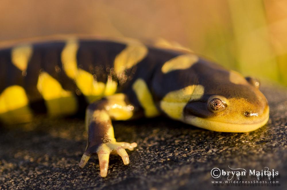 Amphibian Documentary