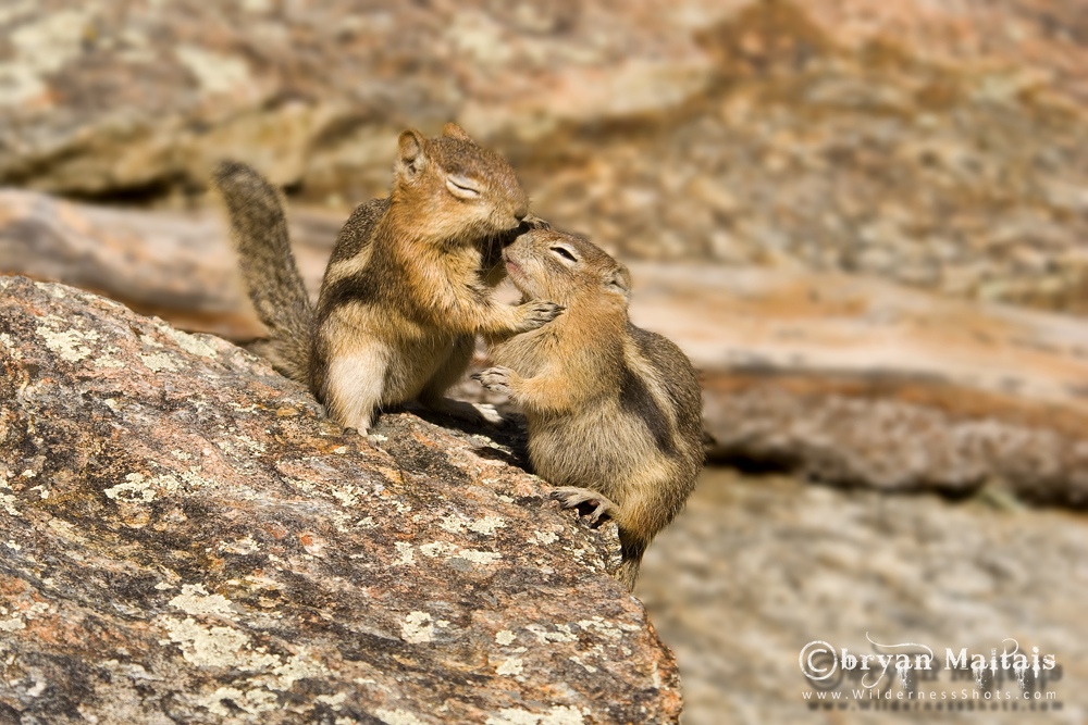 Ground Squirrel Lovers