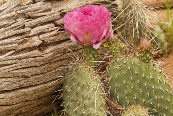 Hunger Cactus Colorado