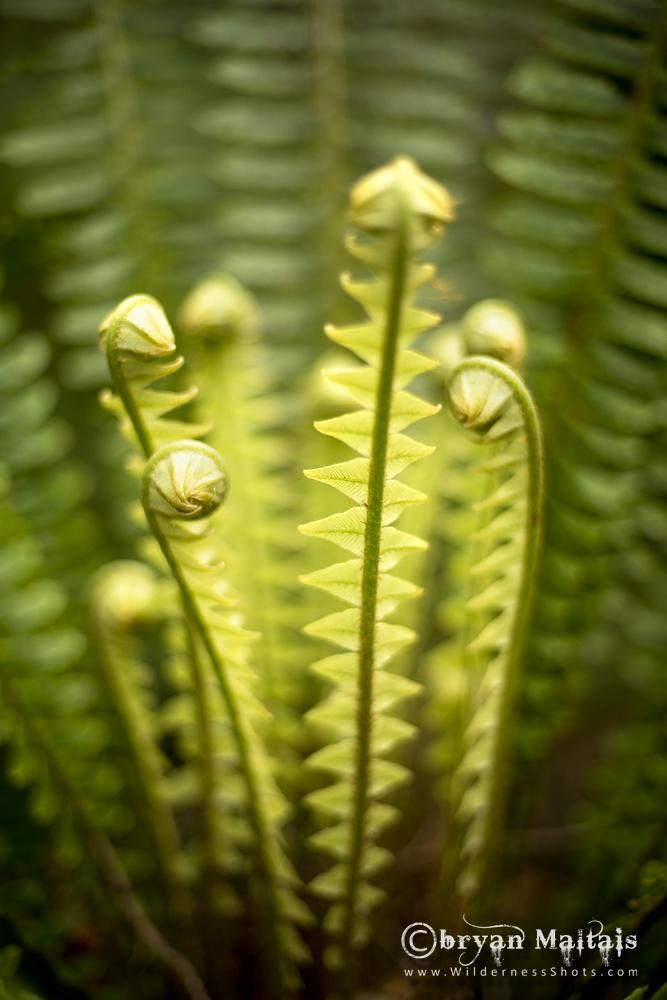 New Zealand Fern Vertical