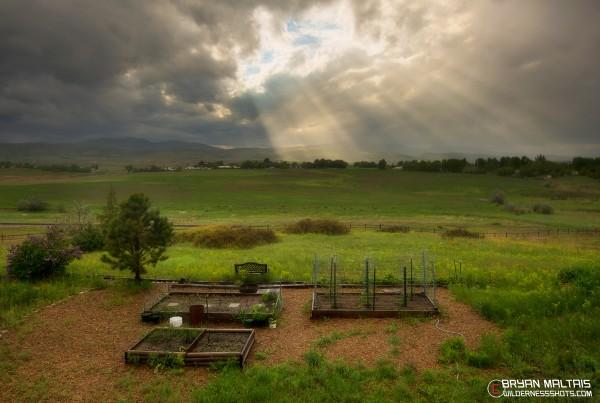 Tranquil-Garden
