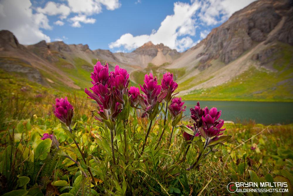 Rosy Paintbrush wildflowers ice lakes basin