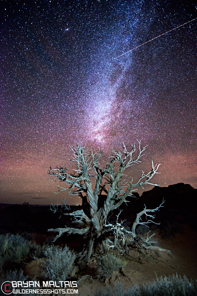 Arches-National-Park-Tree-at-Night-Star-Milky-Way
