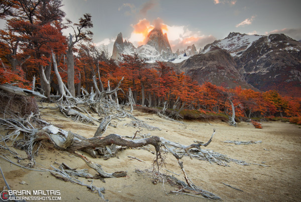 Fitz Roy Dead Tree Fall Colors Patagonia