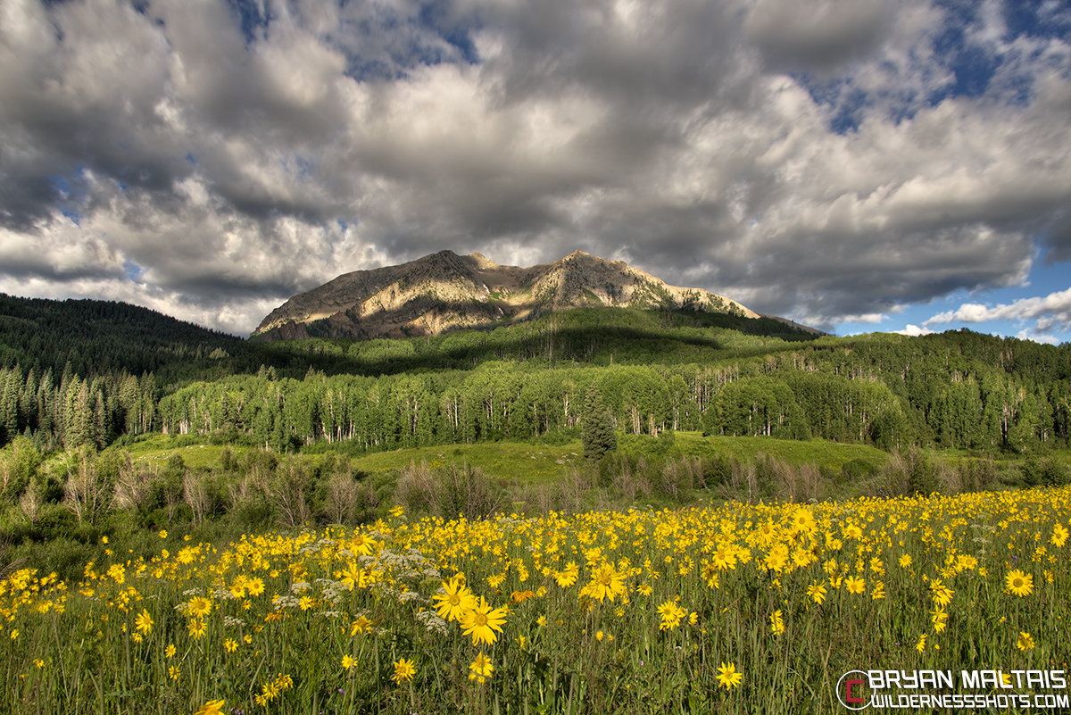East Beckwith Peak Crested Butte Wildflowers