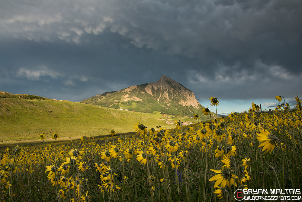 Mt Crested Butte Mammatus Clouds Wildflowers