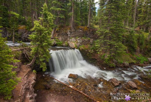 forest waterfall colorado