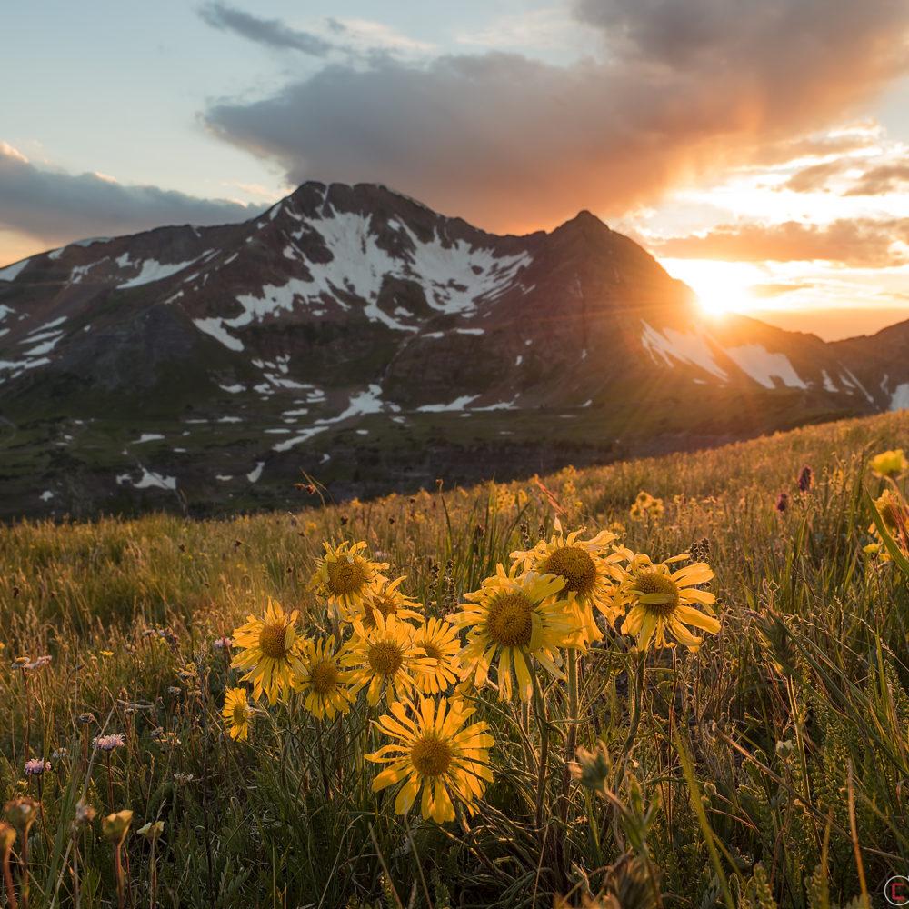alpine-sunflower-mountain-sunset-crested-butte-colorado
