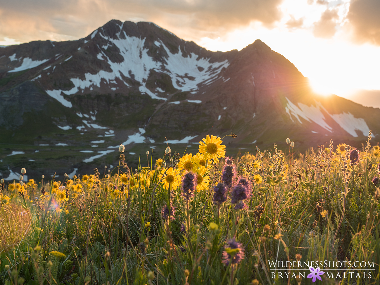 crested butte colorado wildflower sunset photography