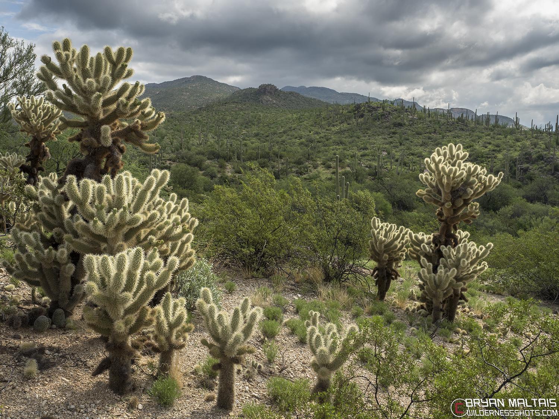 Rincon Mountain Saguaro National Park