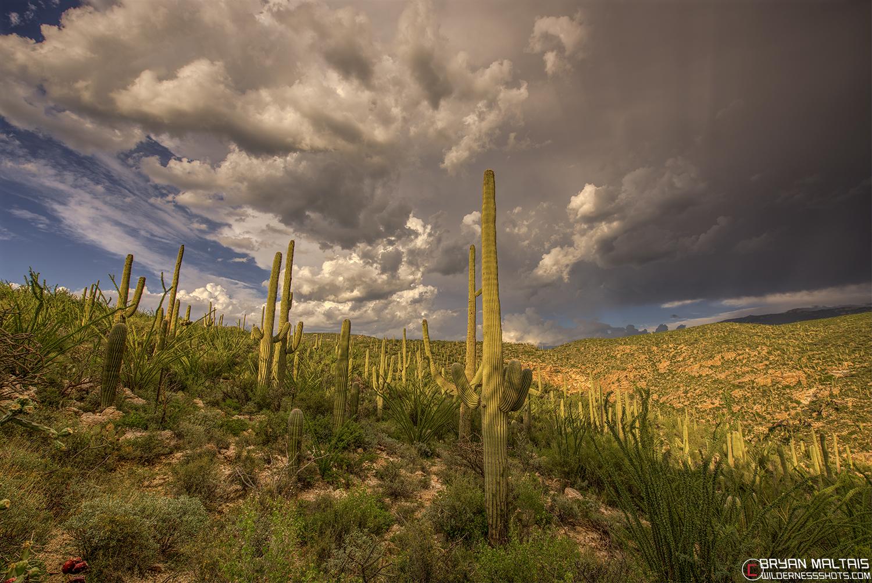 tucson sonoran desert thunderstorm cloud sunset