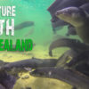 New Zealand Nature Documentary