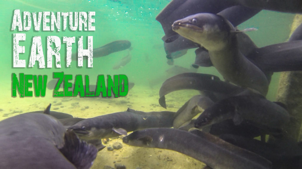 youtube-new-zealand-nature-documentary-thumbnail