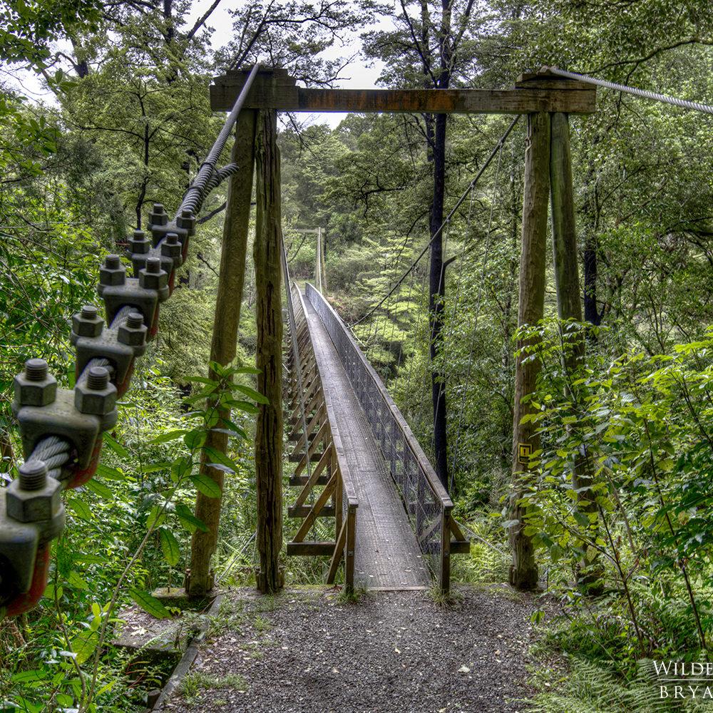 pelorus swing bridge new zealand landscape photography