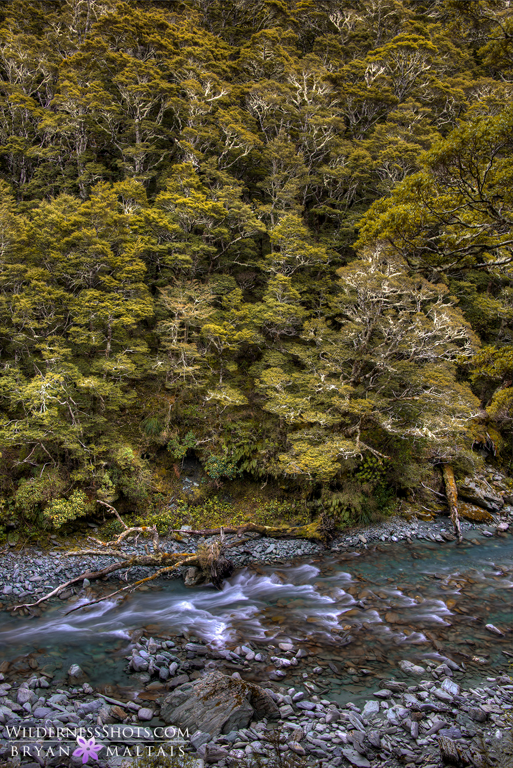 rob roy beech forest river new zealand photos