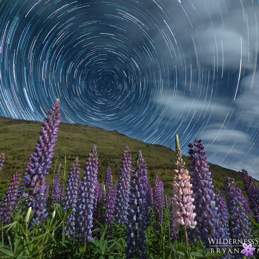 Lupine Star Trails New Zealand Photography