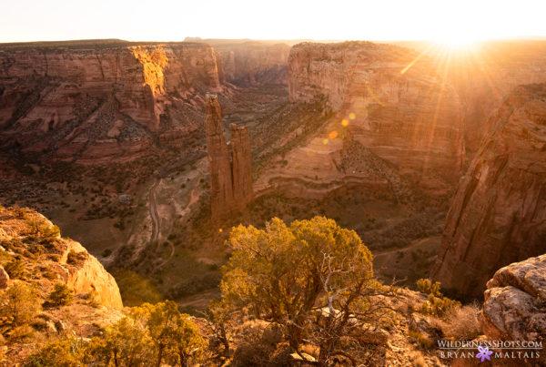 Canyon de Shelly Sunstar